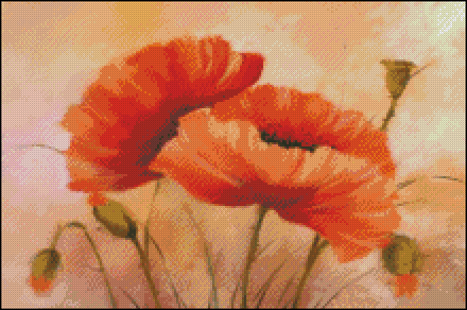 Vibrant poppies II